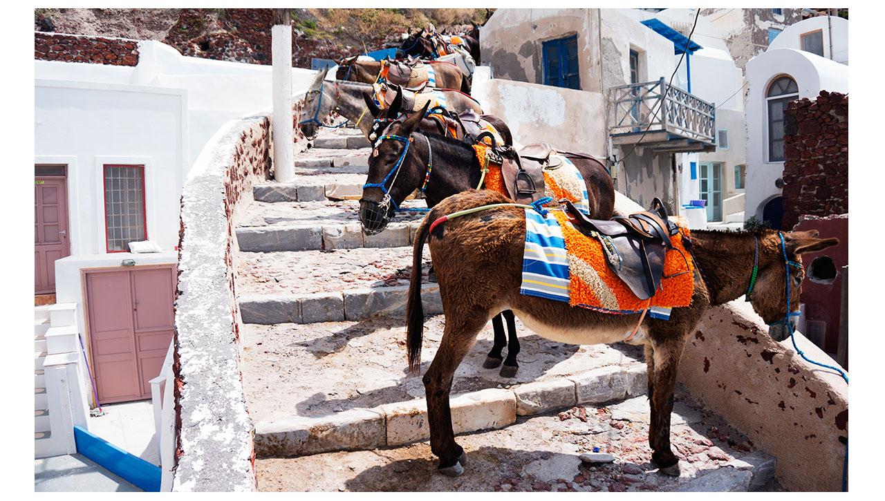 Oia Donkeys